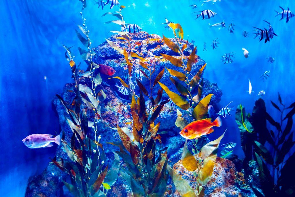 Монтессори дома: карточки о рыбах