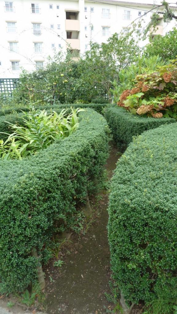 Сад в Монтессори-центре мистера Такане