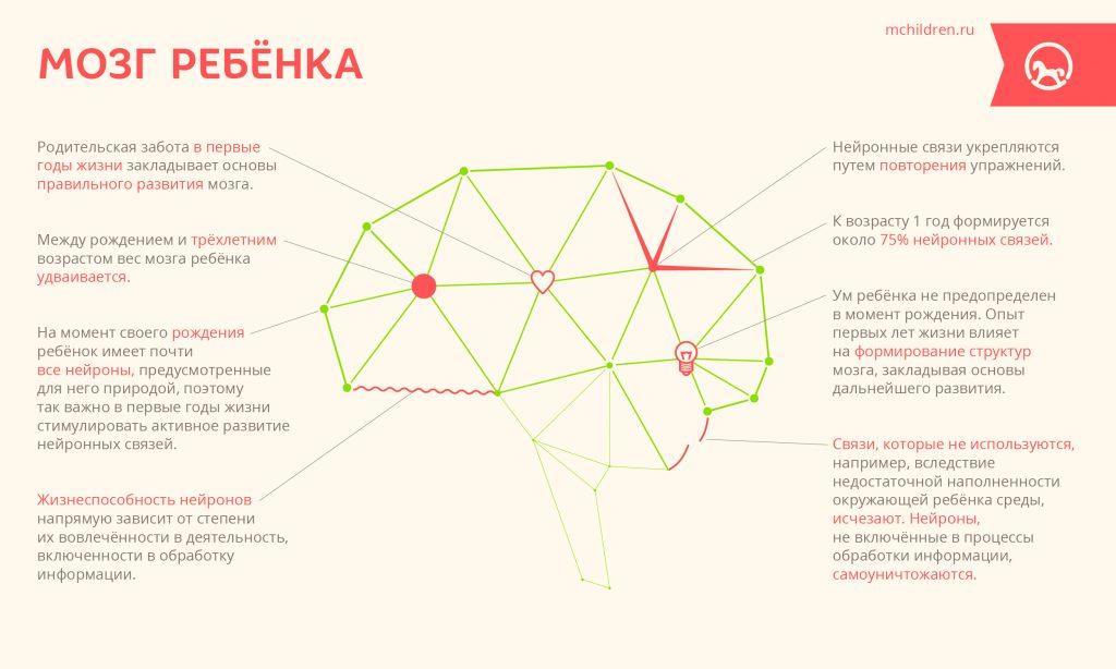 Infogr_24_Mozg_rebenka-24