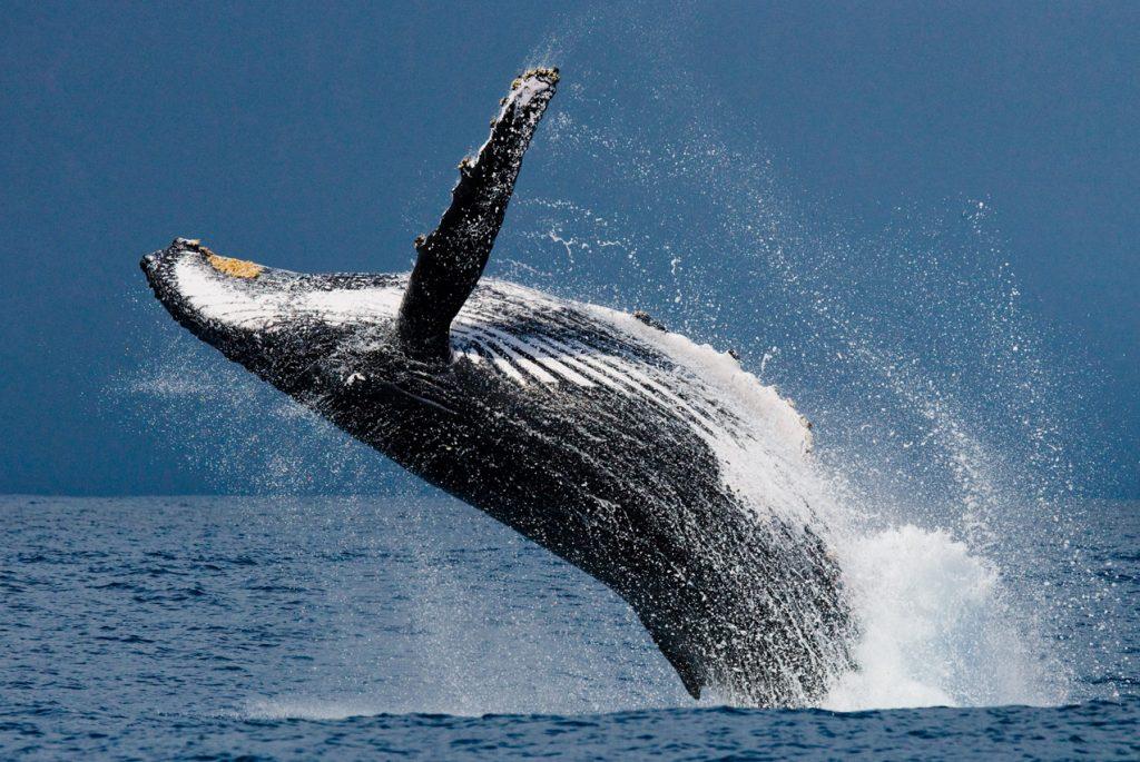 Монтессори дома: карточки по теме «Морские млекопитающие»