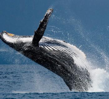 картинки морских млекопитающих