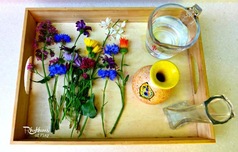 уход за комнатными растениями для детей
