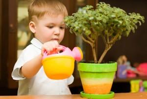 уход комнатными растениями для детей