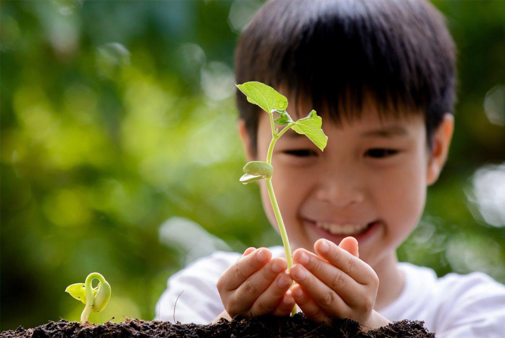 Монтессори дома: карточки по теме «Растения»