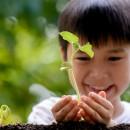 изучаем части растений