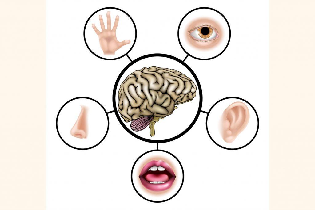 Дети: пять органов чувств