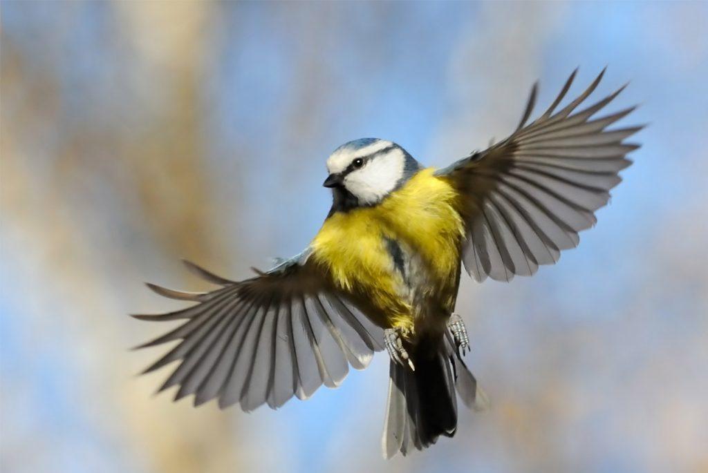 Монтессори дома: карточки по теме «Птицы»