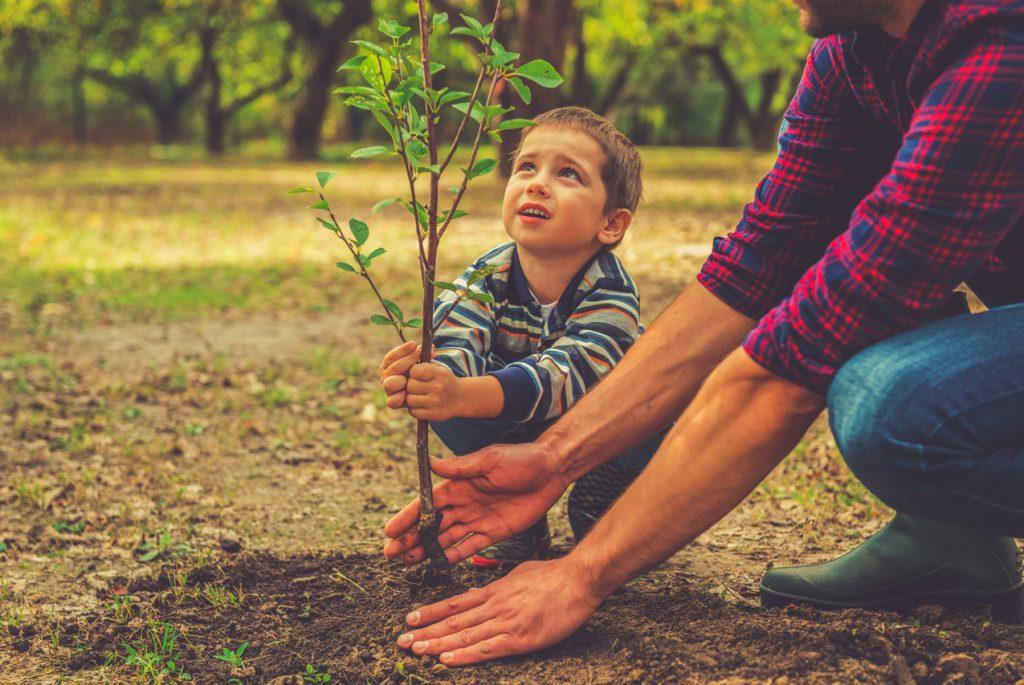 Монтессори дома: карточки по теме «деревья»