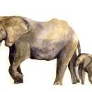 животные и их детёныши