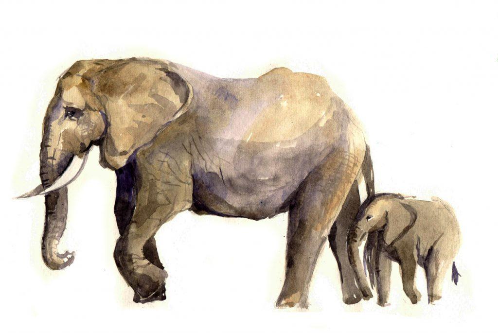 Монтессори дома: акварельные открытки «Животные и их детёныши»