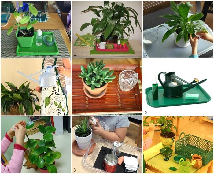 ухаживаем за растениями
