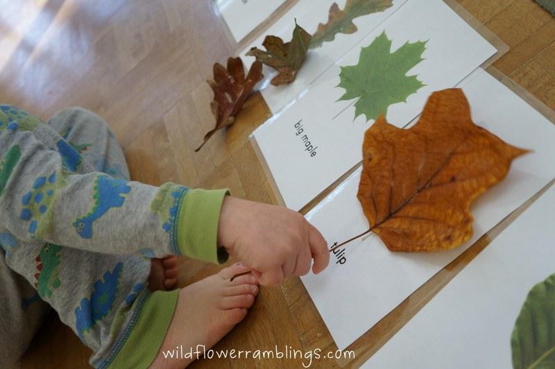 изучаем растения с малышом