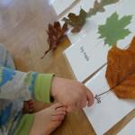 Изучаем с детьми тему «Растения»