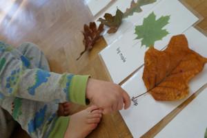тема растения для детей