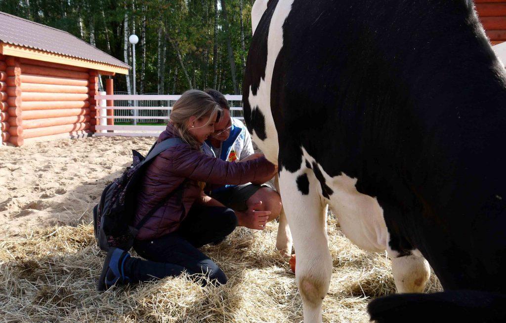 подоить корову в контактной деревне