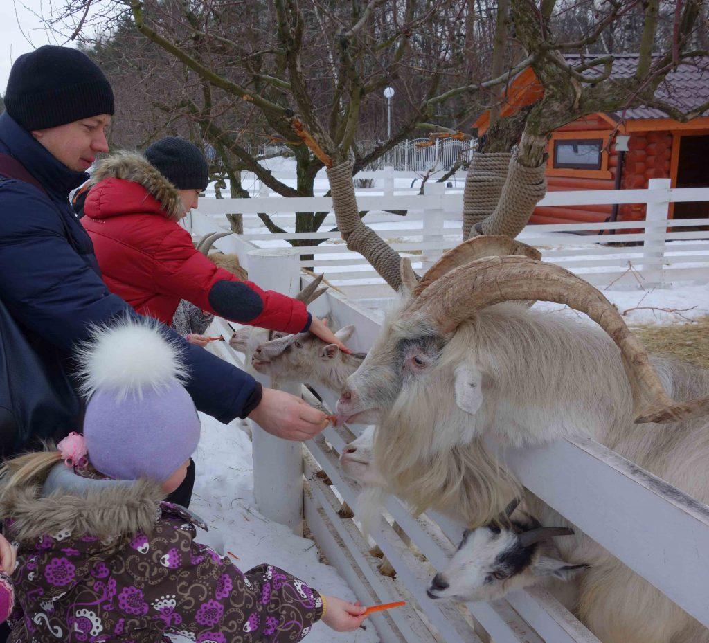 кормить животных в контактной деревне