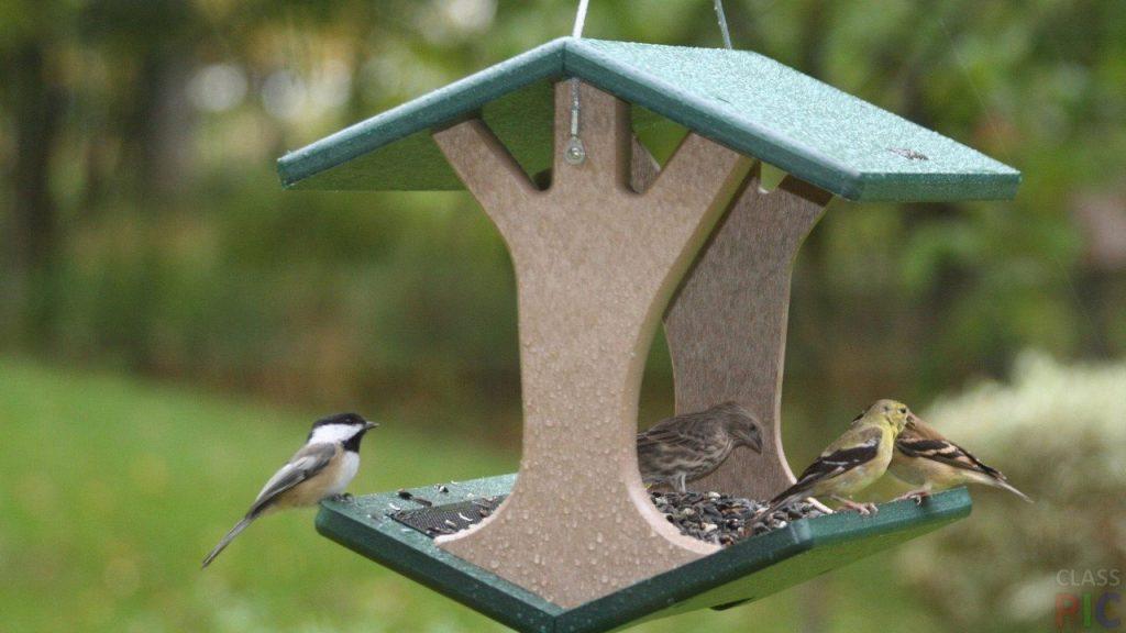идеи для кормушки для птиц