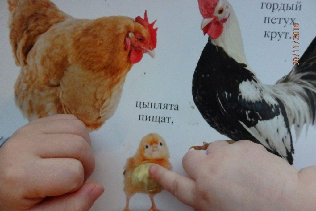 книга хрю отзыв читателя