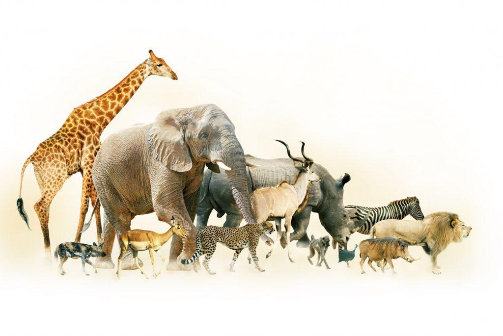 МОНТЕССОРИ ДОМА: КАРТОЧКИ ДЛЯ ДЕТЕЙ ПО ТЕМЕ «ЖИВОТНЫЕ АФРИКИ»