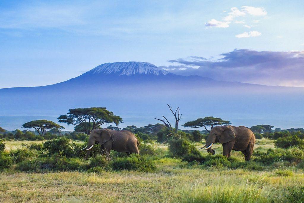 Монтессори дома: карточки для детей по теме «Природа Африки»