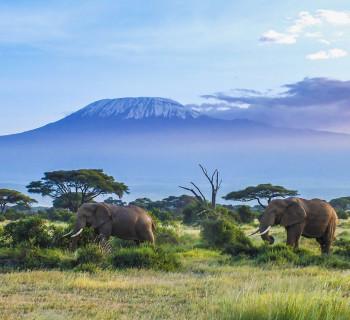 карточки по теме природа Африки для детей