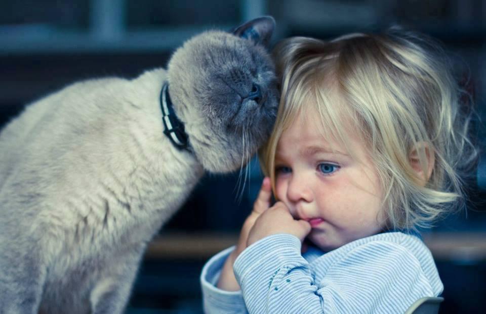 каких домашних животных заводить ребёнку