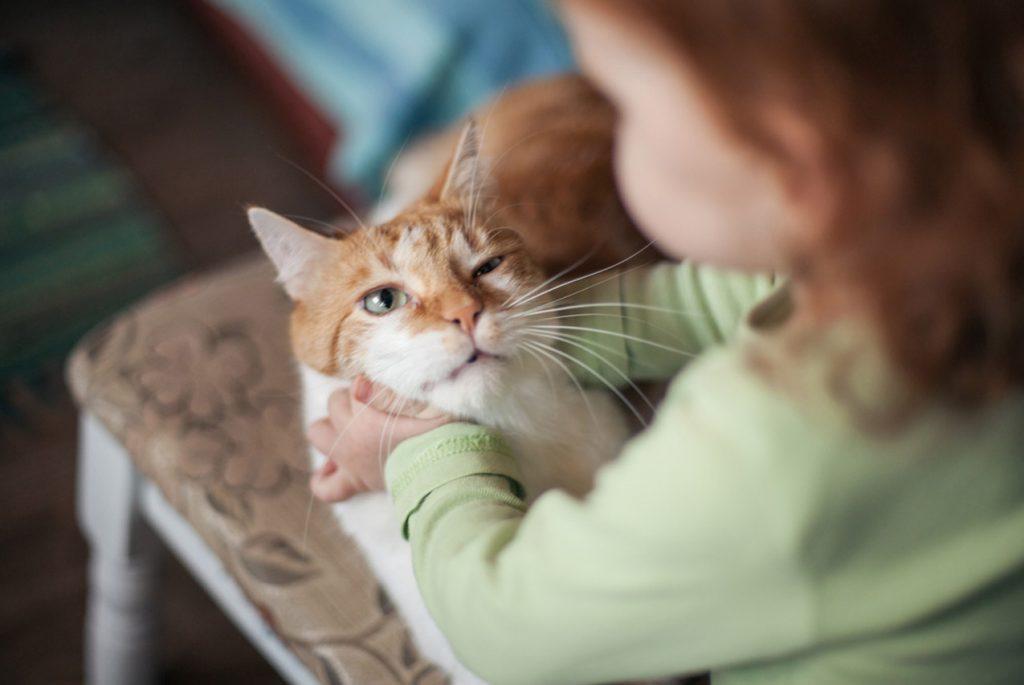 Почему ребёнок мучает котёнка и что делать