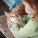 почему ребёнок мучает котёнка