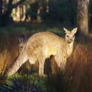 """карточки для детей """"Животные Австралии"""""""