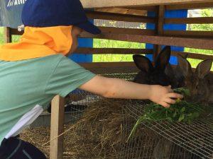 Ребёнок кормит кроликов