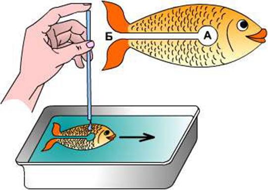 опыты для детей быстрая рыба