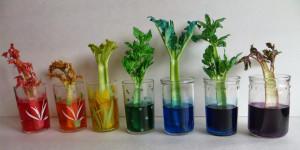 Как-пьют-растения — опыты для детей