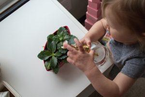 ребёнок поливает цветы