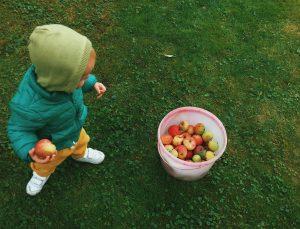 малыш собирает яблоки
