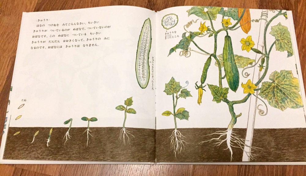 Книга с рисунками о том как растут растения