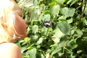 Ребёнок рассматривает бабочку