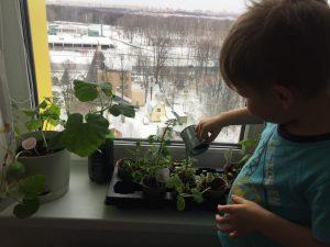Даниэль поливает рассаду