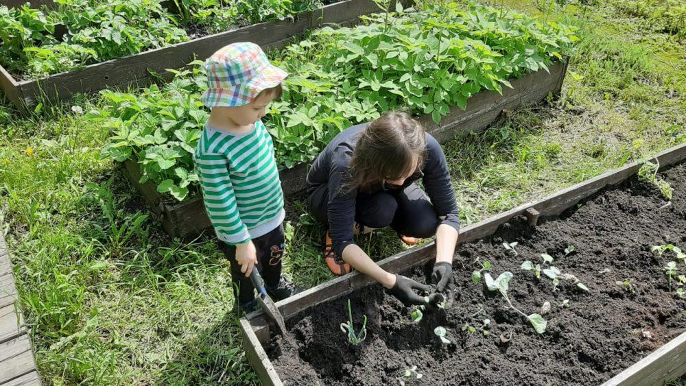 Исследуем с ребёнком корни расстений