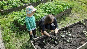 показываю корни растения ребёнку