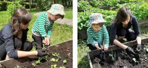 высаживает растения