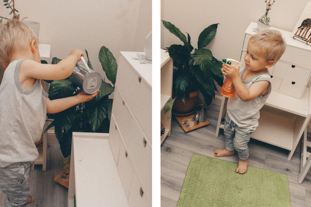 Гриша поливает и опрыскивает цветок