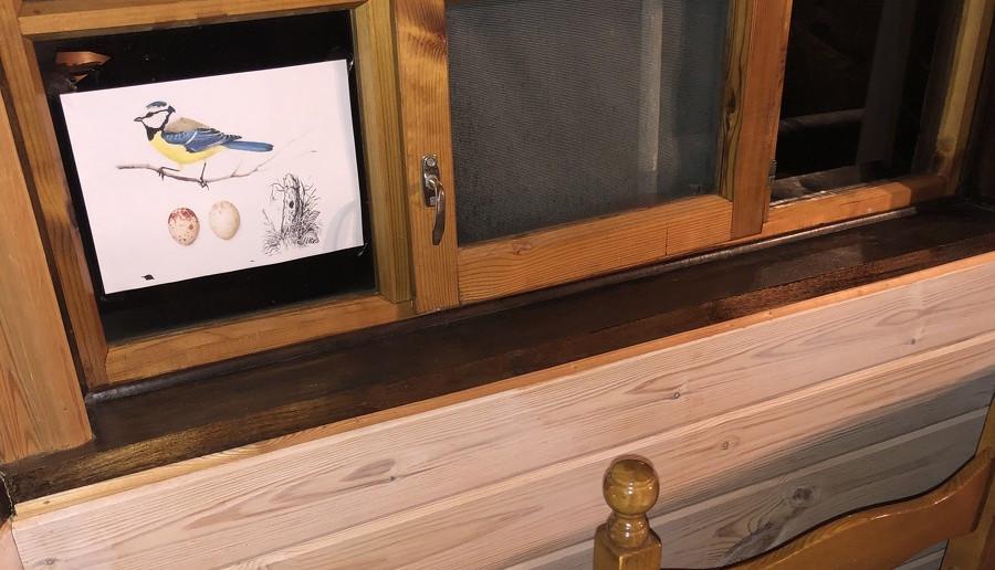 Рисунок синицы и её яиц