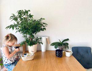 дочь ухаживает за цветком — опрыскивает и поливает