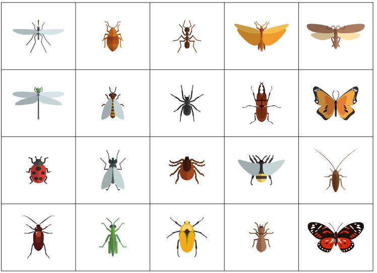 Дидактические карточки с насекомыми