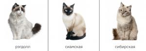 Классификационные карточки с кошками