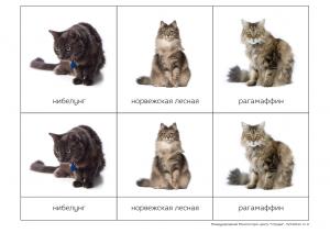 кошки карточки