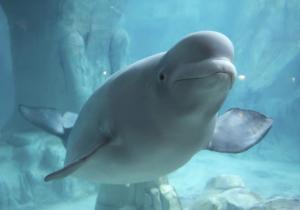 морские млекопитающие карточки