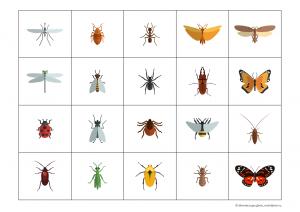насекомые карточки