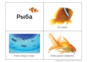жизнь рыб
