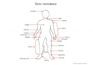 тело человека карточки